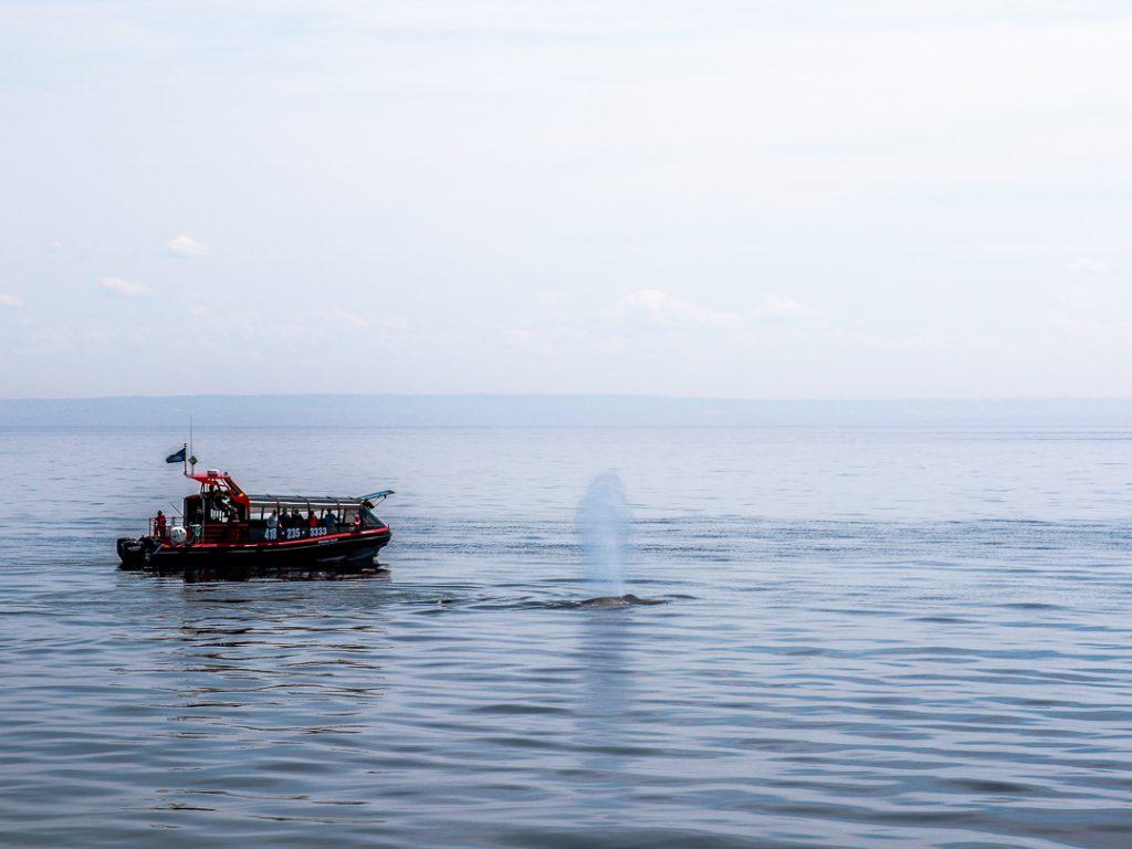 Kanada mit Kindern - Wale beobachten