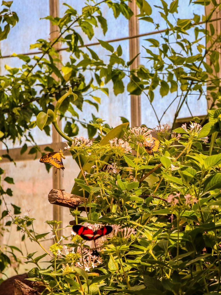 Schmetterlingshaus auf der Insel Mainau