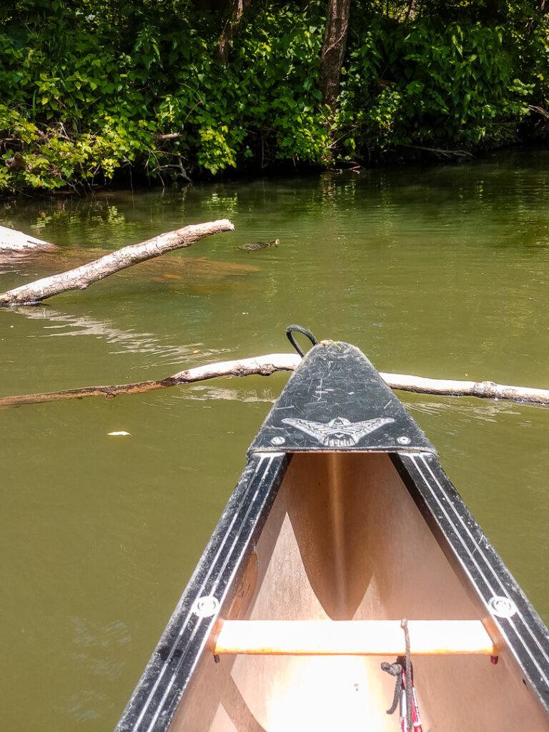 Vom Kanu aus beobachten wir eine Schildkröte